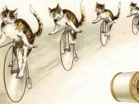 CatCoats